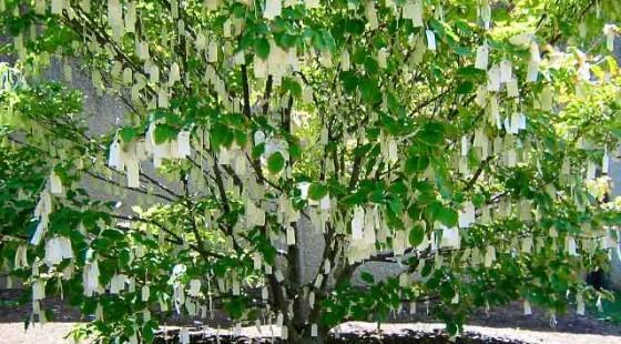 Yoko Ono - Wish tree