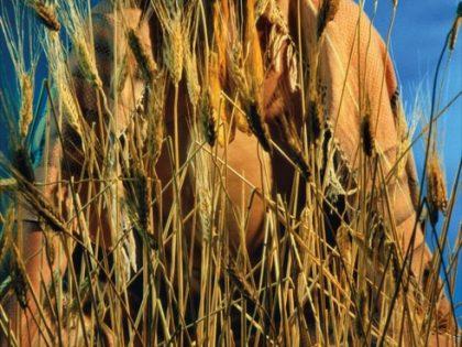 Cindy Sherman. Untitled 152, 1985.
